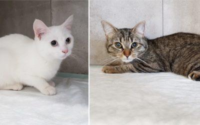 La stérilisation des chattes